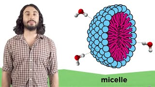 The Laws of Thermodynamics, Entropy, and Gibbs Free Energy