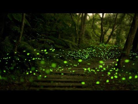Conoce el santuario de las luci rnagas en tlaxcala youtube for Espectaculo de luciernagas en tlaxcala