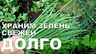Храним ЗЕЛЕНЬ В ХОЛОДИЛЬНИКЕ долго / How to store GREENS in the refrigerator for a long time