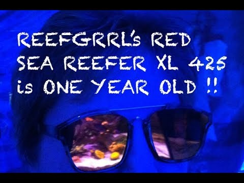 reefgrrl's-red-sea-xl-425---one-year-anniversary‼️