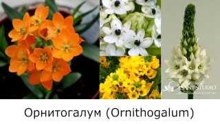Каталог цветка и зелени. Каталог квітів і зелені