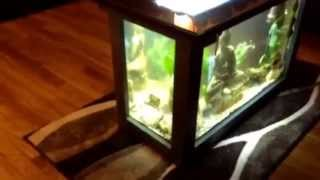 My Coffee Table Aquarium / Acuario Mesa De Centro Pecera
