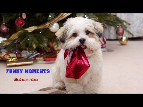 Dogs Opening Christmas Presents Compilation 2014-2015 [HD]