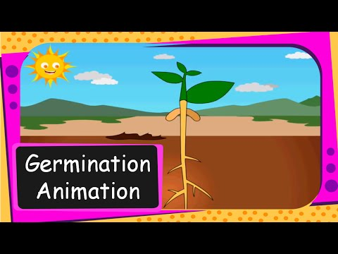 Science Seed Germination Animation From Seed To Plant English