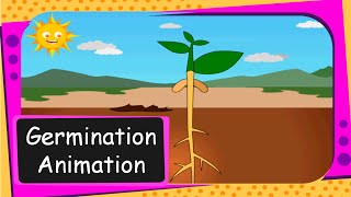 Science - Seed Germination  Animation (From seed to plant)  - English