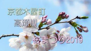 京都木屋町☆高瀬川☆桜まつり2019☆ぶらり散策!