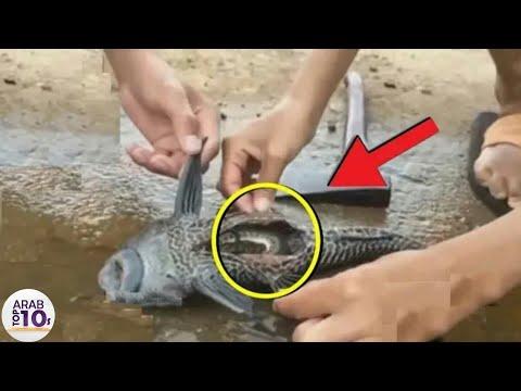 وجد الشباب سمكة غريبة.. وقررو فحصها من الداخل فوجدو المفاجأة سبحان ﷲ...!!!