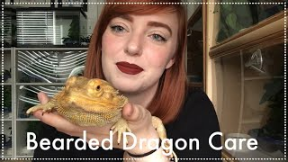 How to Care for Bearded Dragons | A Complete Guide