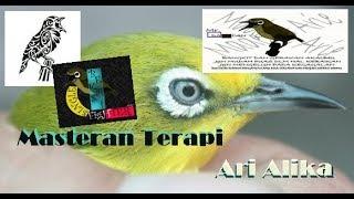 Download Mp3 Masteran Terapi Agar Pleci Ngalas Nyeped Nembak