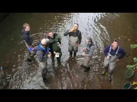 Mühlgang Fischrettung 2015