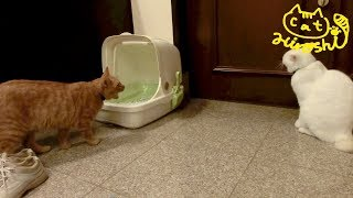 ひろしはチロと遊びたいけど チロは一人になりたいみたい。 妹猫タマが...