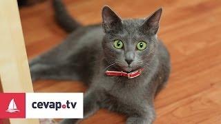 Kediler ishal olursa ne yapılmalıdır?
