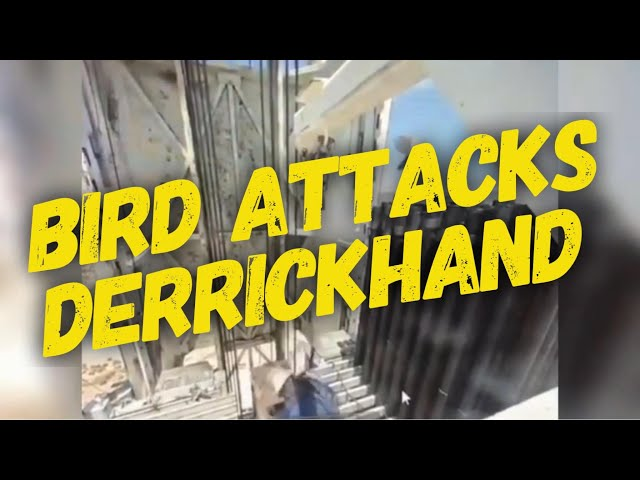 Bird Attack! 🤣