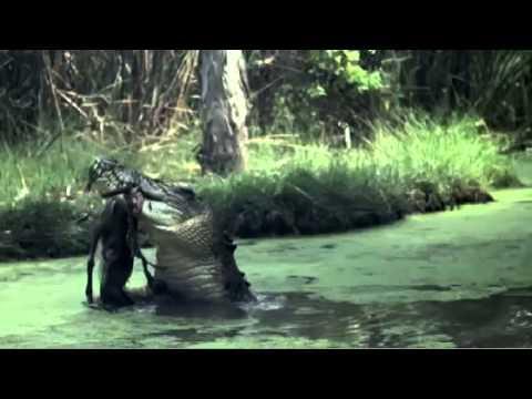 Natural History Promo - Richard Fitzpatrick
