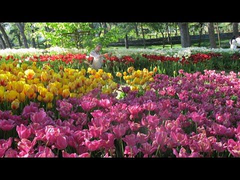 Таджикистан засаживают цветами