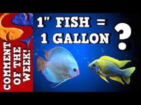 1 Gallon Of Water Per 1