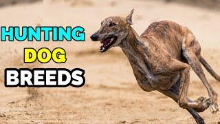 10 Best dog breeds for Hunting | Hunting Dog Breeds | Cutest Dog breeds