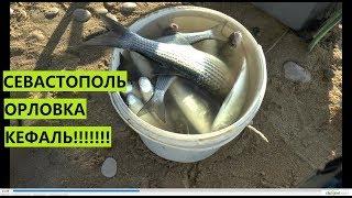 Севастополь Орловка КЕФАЛЬ ПОШЛА
