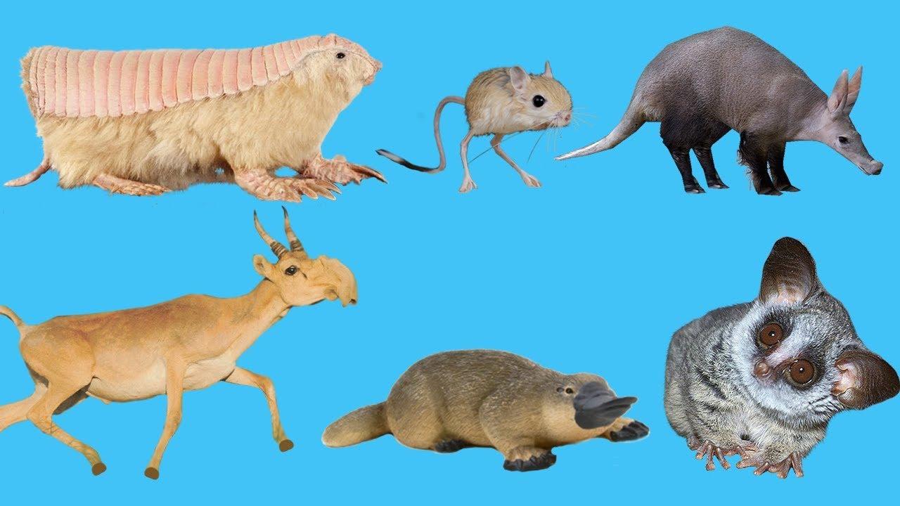 Weird Animals For Kids 4