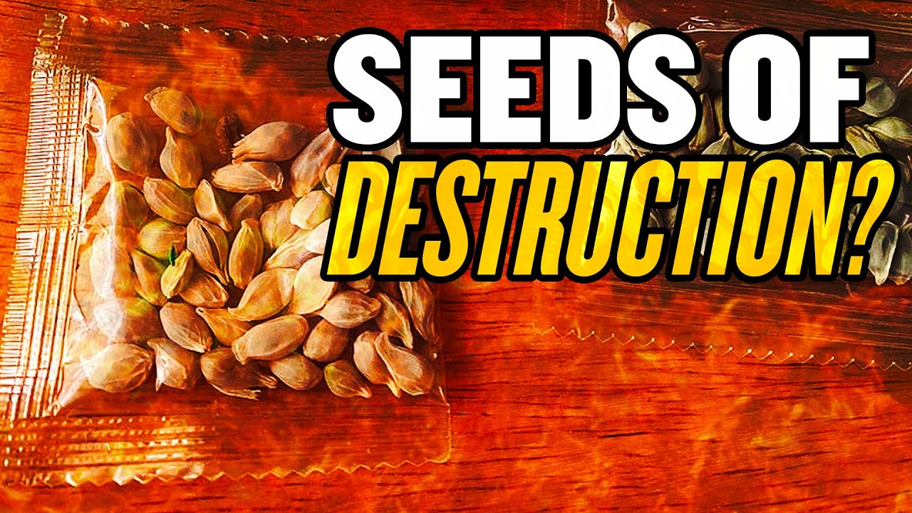 Mysterious Seeds from China—Are They Dangerous?