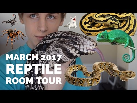 MARCH 2017 REPTILE ROOM TOUR (TEGU, CHAMELEON, SNAKES, GECKOS, AND INVERTEBRATES)