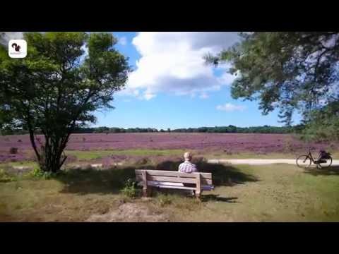 August TV -