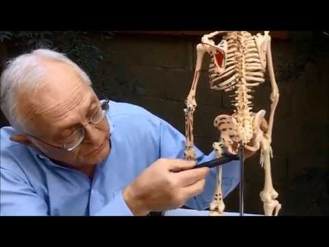 I Can Explain --- Is This Bone From A Human Ancester (hominin) ? by M.W.Clark