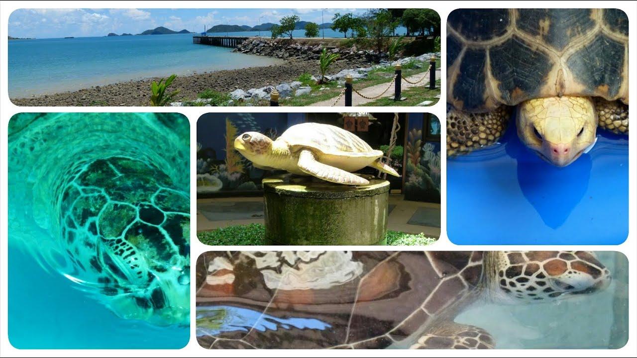 Sea Turtles Conservation Center - Royal Thai Navy