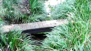 練馬区大泉の湧水