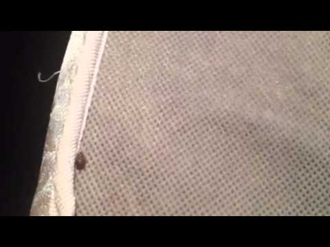 Bed Bug Removal Houston Texas
