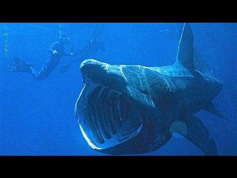 14-world-s-biggest-sea-creatures