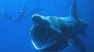 14 World's Biggest Sea Creatures