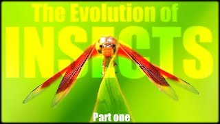 The Evolution of Insects (part 1) : stick insect, mantis, cicada