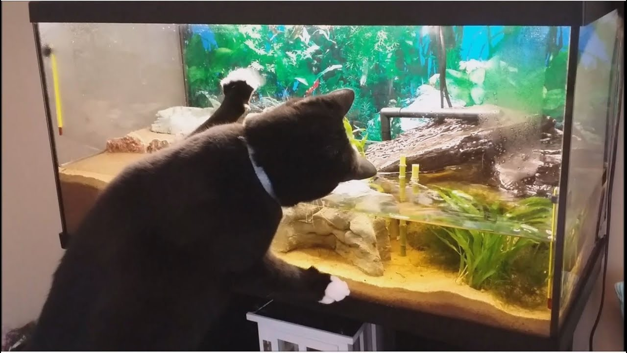 Cats vs fish tank youtube for Youtube fish tank