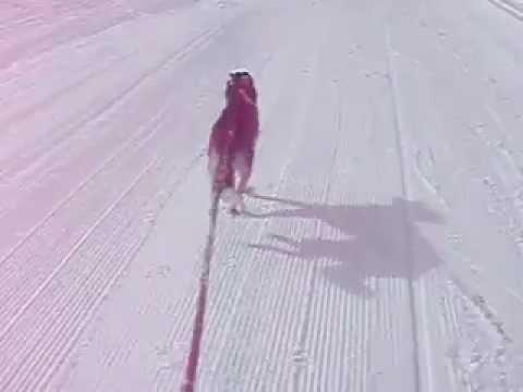 Siberian Husky (Shavano) Pulling Snowboarder