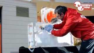 видео Как сделать фигуру изо льда с живыми цветами?