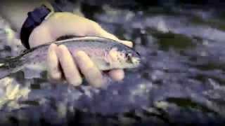 Idaho Fly Fishing on the Fall River, near Ashton ID