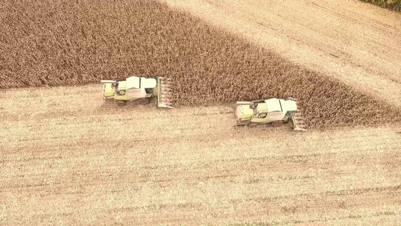Вурнарский мясокомбинат. Уборка кукурузы на зерно. 11.10 ...
