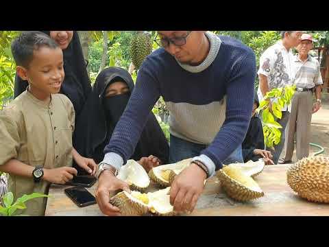 belah-durian-bawor-di-bawah-pohonya-itu-mengasyikkan-gaes,-agus-081259024491