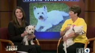"Oklahoma Westie Rescue's ""heartbreak Kids"""