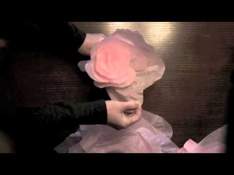 Large Tissue Paper Flowers