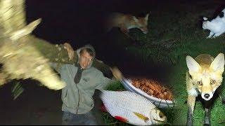 Wędkarstwo-Bitwa lisa z kotem-rzeka Bug-wyprawa wędkarska
