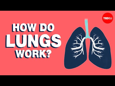 How Do Lungs Work? - Emma Bryce