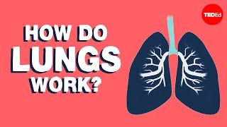 How do the lungs work? - Emma Bryce