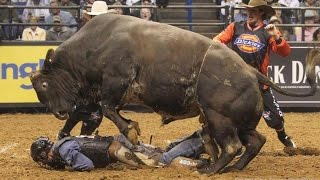 Улетные приколы с быками полная жесть +18