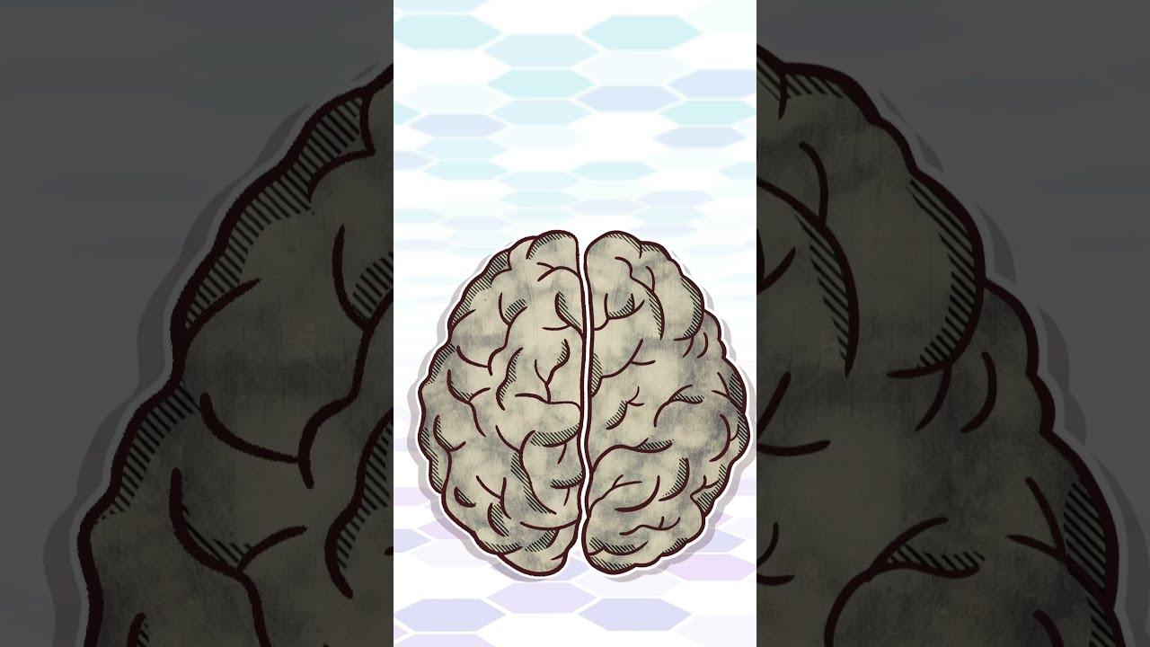 #Shorts ¿Tienes dos cerebros?- CuriosaMente 294