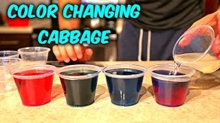 Color Changing Cabbage - Science Experiments