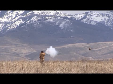 Hunting Upland Birds Mountain Man Style!