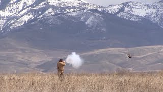 Download Video Hunting Upland Birds Mountain Man Style! MP3 3GP MP4