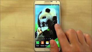 Panda live wallpaper for Android phones and tablets screenshot 1